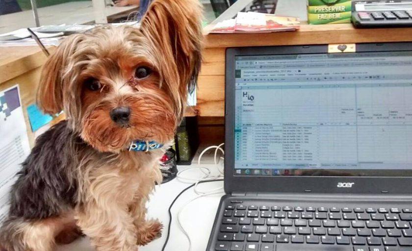 5 vantagens de trabalhar em locais Pet Friendly