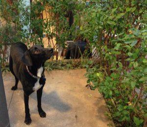 Cachorro Rufus no espaço Pet Friendly Estação Coworking