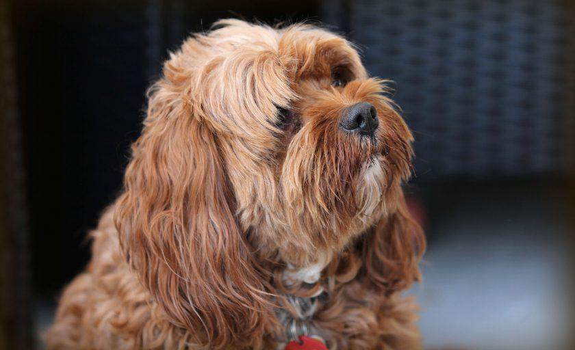 Coworking pet friendly: onde encontrar?